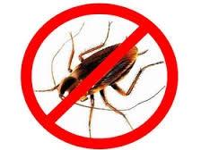 униЧтожение клопов тараканов всех насекомых грызунов